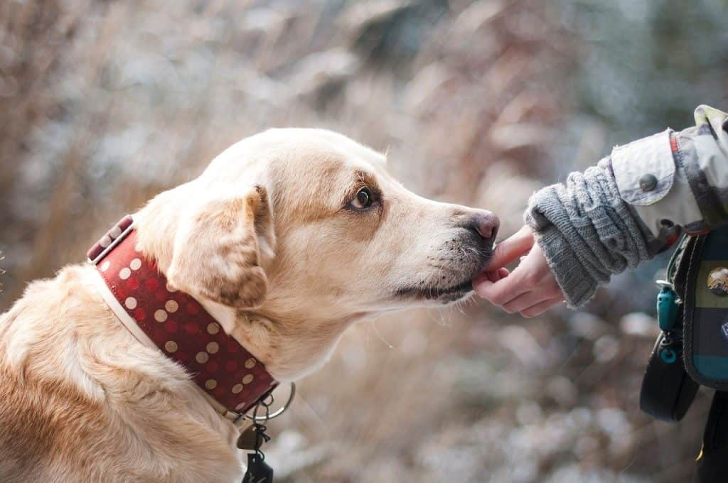 how pet dander affects your lungs