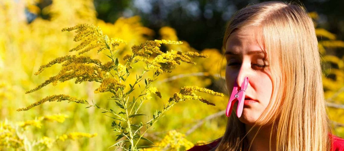 Ragweed Allergies